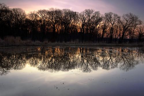 morning sunrise march illinois spring wetland oaktoncommunitycollege omot desplainesillinois cookcountyforestpreserves dpphdrtool