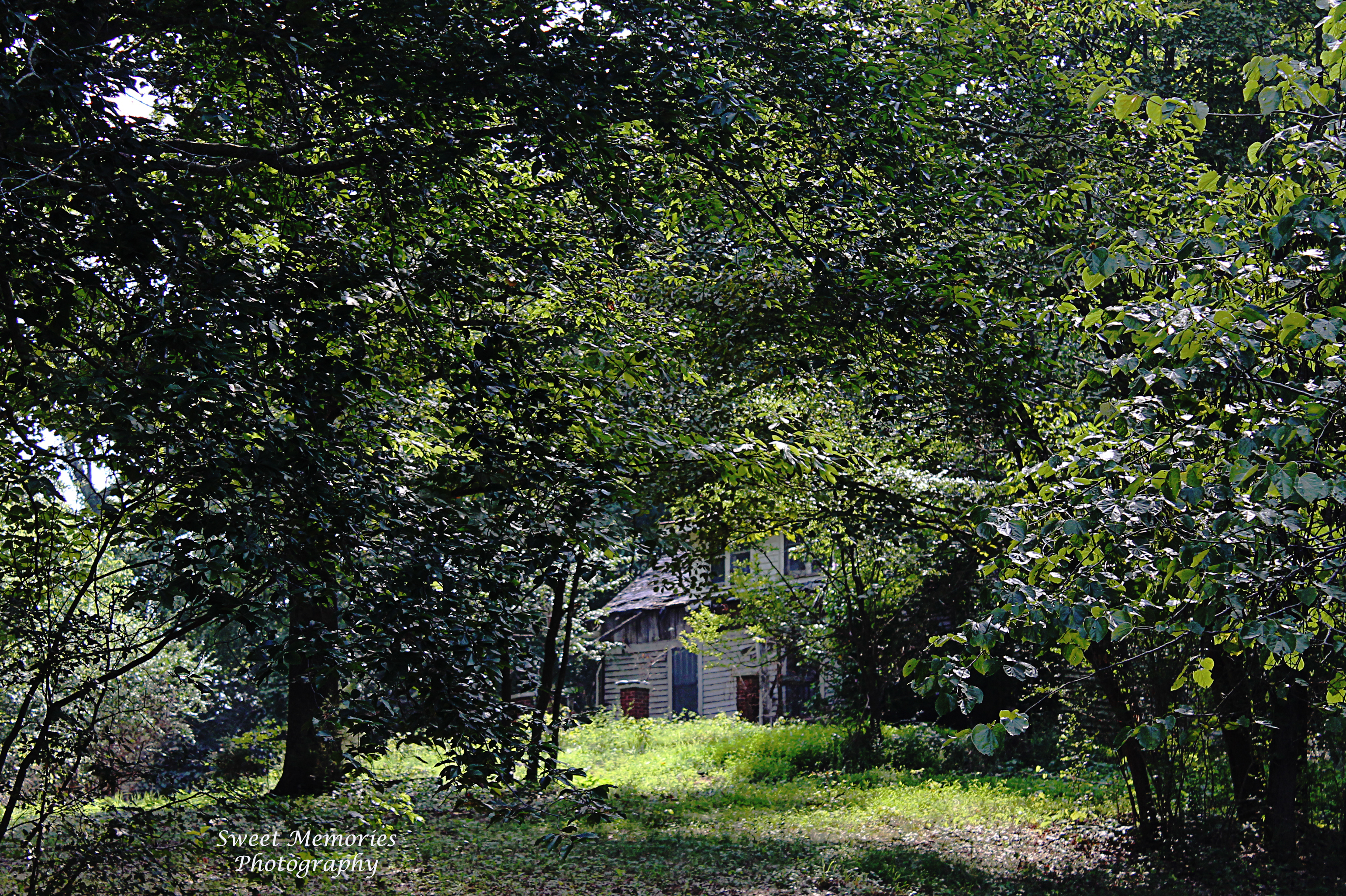 Tennessee carroll county clarksburg - House Green Abandoned Tennessee Macedonia Westtennessee Oncewashome