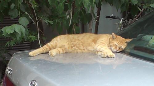 cat952