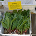 Allium tricoccum, Ramps, for sale at Cortelyou Greenmarket, April 2012