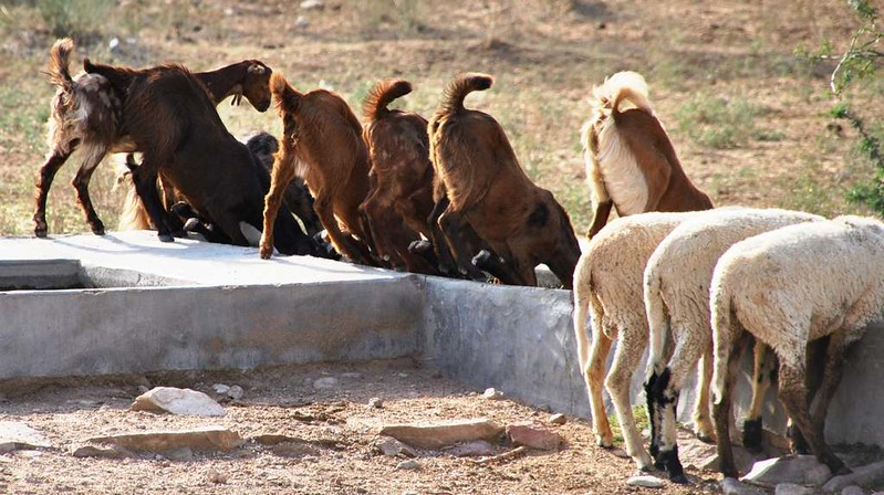303 Camel safari a Jaisalmer (58)