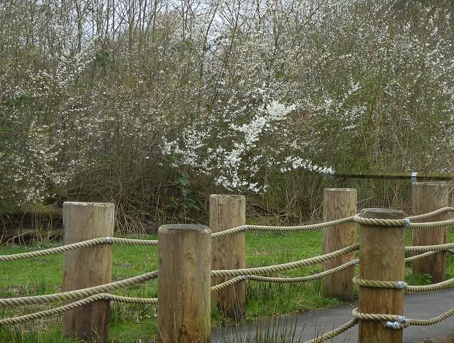 Spring blossom by the, Panasonic DMC-TZ25
