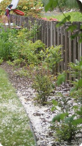 20140603 Garden Update_38