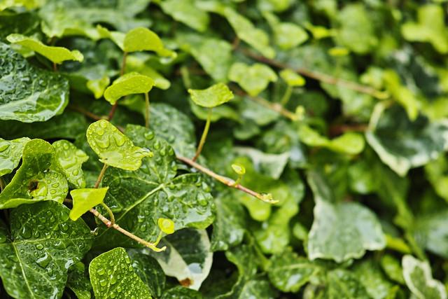 20140701_03_fresh verdure