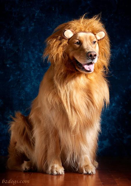 Lion King Henry