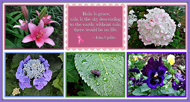 """""""Rain is grace; rain is the sky descending to the earth; without rain, there would be no life."""""""