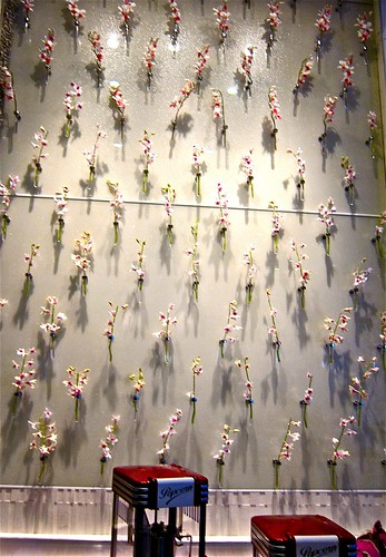 wall of live orchids