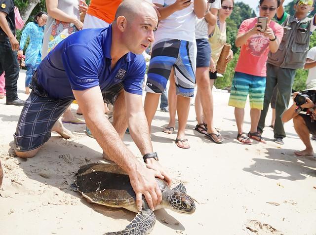 Ninja the turtle release - rebecca saw - gaya island resort review -007