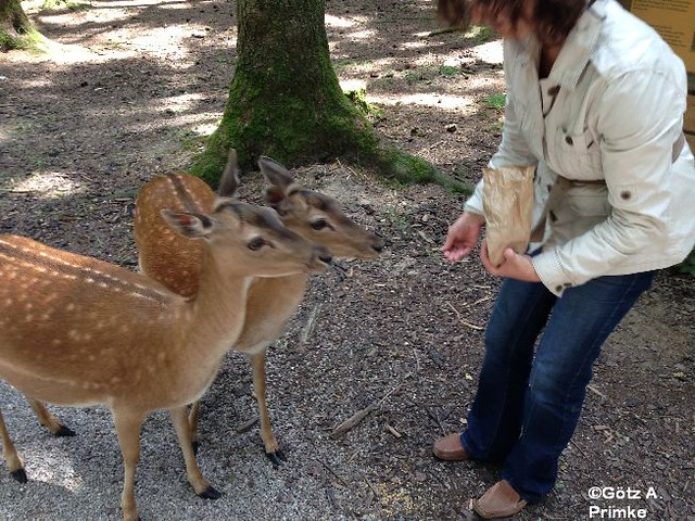 Muenchen Wildpark Poing Juni_2014_053