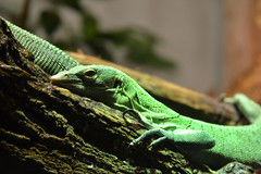 Green Monitor