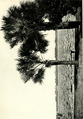 """Image from page 148 of """"A thousand-mile walk to the Gulf"""" (1916)"""