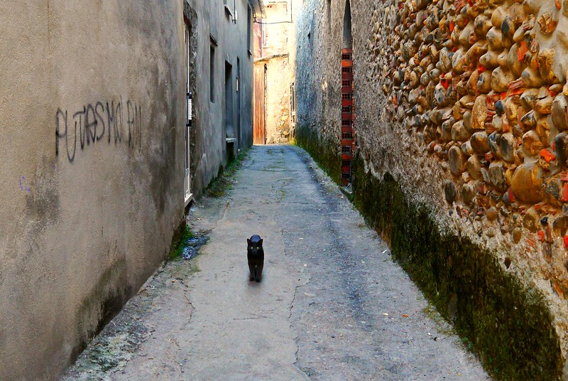 Spanish village Cat
