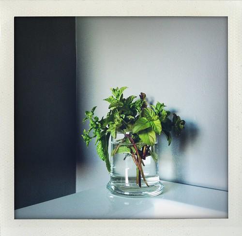 Garden herbs