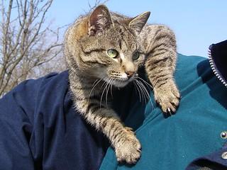 Cat on Shoulder