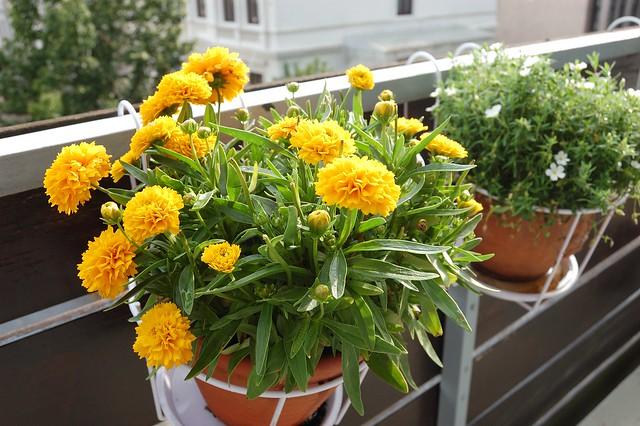 Balcony garden update