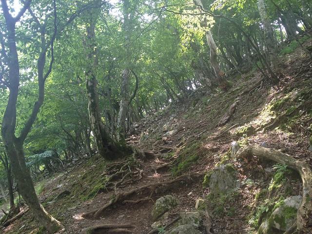 藤原岳 登山道
