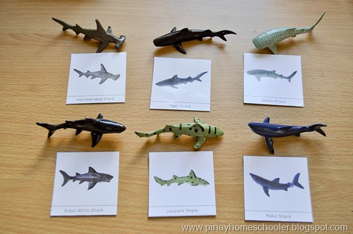 Shark Matching with Free Printable Shark Cards (Photo from The Pinay Homeschooler)