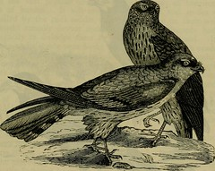 """Image from page 612 of """"Reptiles and birds : a popular account of their various orders, with a description of the habits and economy of the most interesting"""" (1883)"""