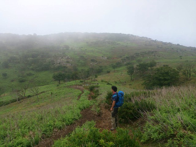 藤原岳 展望台下 登山道