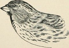 """Image from page 196 of """"A guide to the birds of New England and eastern New York; containing a key for each season and short descriptions of over 250 species, with particular reference to their appearance in the field"""" (1904)"""