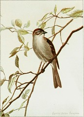 """Image from page 316 of """"Bird-life: a guide to the study of our common birds"""" (1900)"""