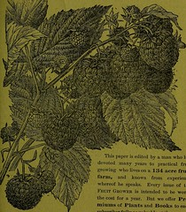 """Image from page 76 of """"How to propagate and grow fruit"""" (1885)"""