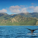 Kaikoura - Whale Watching