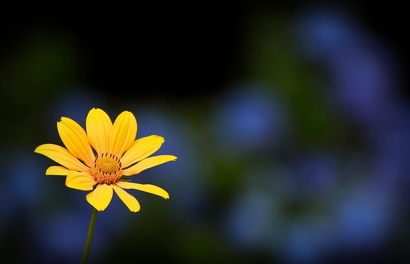 flower 118