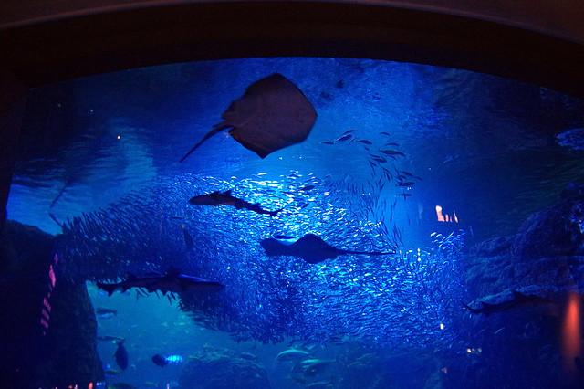 新江ノ島水族館 ナイトアクアリウム_035