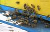Bizzi Bees