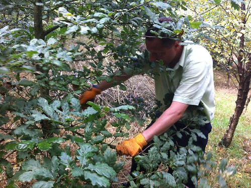 Volunteer Week Colne Valley Tree Society