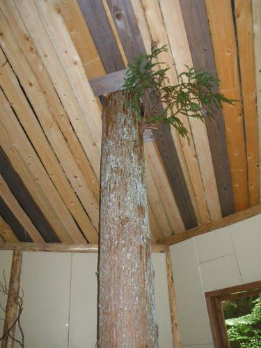 ツリーハウス天井