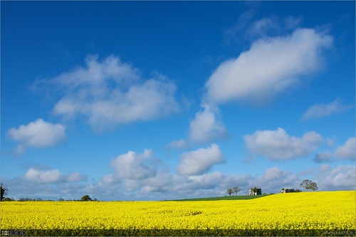 summer flower castle yellow clouds ruin localhistory historicbuilding landscapeshot rathcoffeycastle rapebrassicanapus