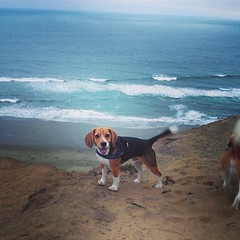 Another trip to Ft. Funston! We got to watch the sun set in a pretty empty park! Love it!