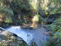 2014-08-10 Lilydale Falls 104 - Upper falls viewing platform
