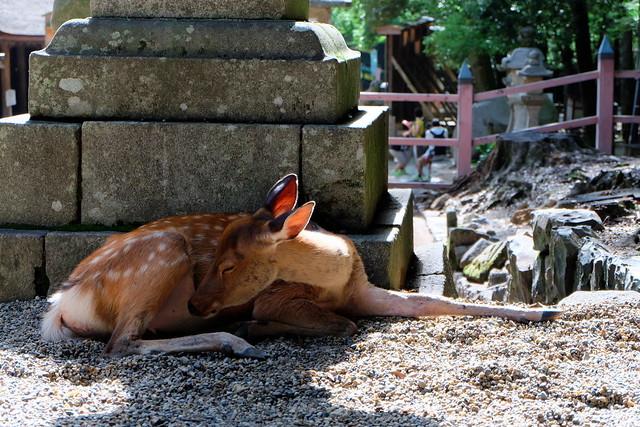 Deer03