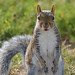 Washington Monument Squirrel