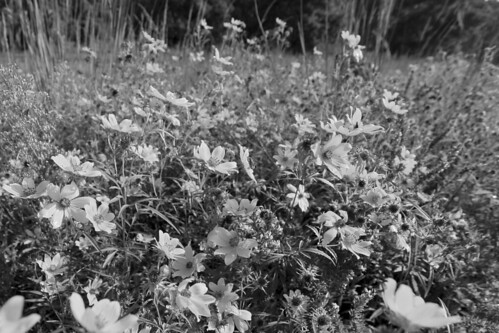 A late summer bouquet_ Kentucly pasture reclaimed by native plants