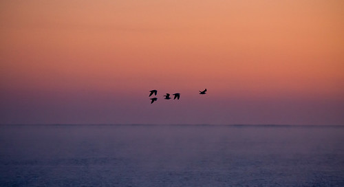ocean red sky seagulls bird birds sunrise dawn flying tasmania bridport