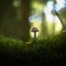 "Mushroom by "" Ajnagraphy "" (János Csongor Kerekes)"