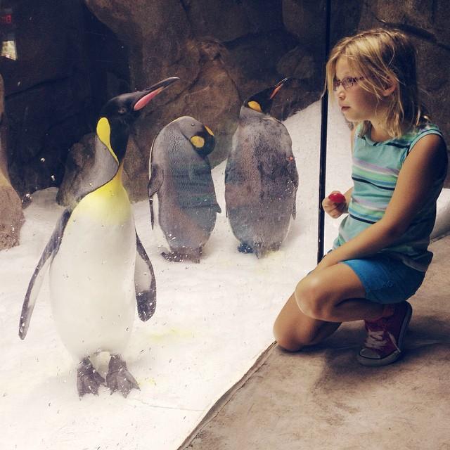 She speaks penguin  #kc #kczoo #penguin #penguinpower #futurezookeeper