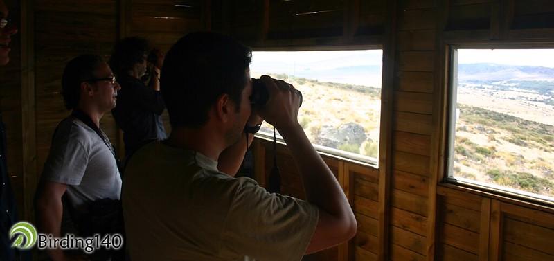 Birding140 observando carroñeras en el punto de alimentación suplementaria de El Espinar