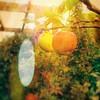 Last #apple of the #Summer