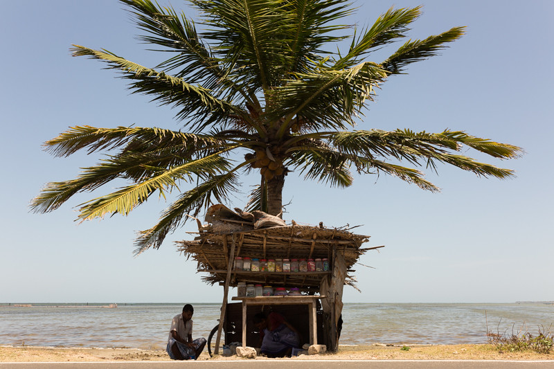 Shop under a palm, Jaffna outskirts