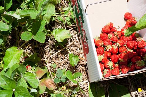 21berries.jpg