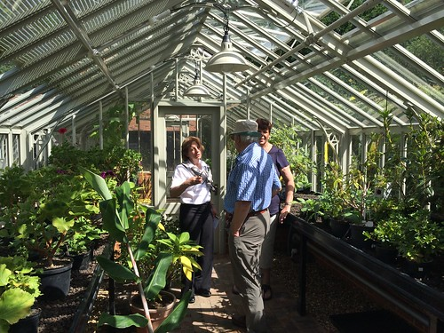 Inside the Alitex greenhouse at Hatfield House