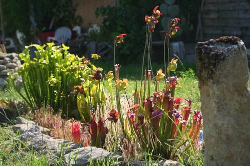 plantes2014 097