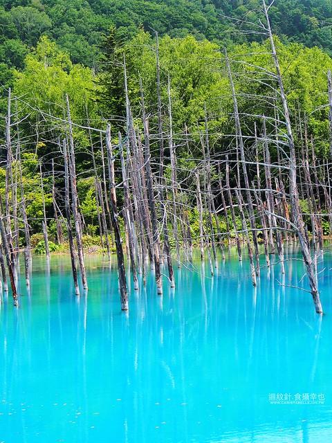 美瑛 青い 池(青池)