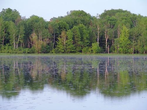 trees water wisconsin