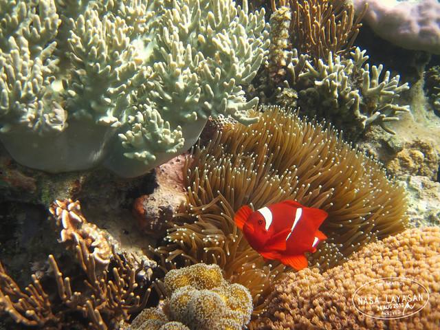 coralgarden2